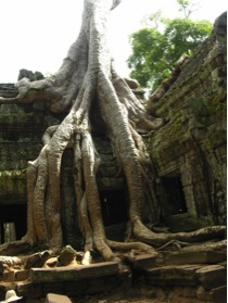 Ta Prohm, where Tomb Raider was filmed, next to Angkor Wat (Image: UNESCO)